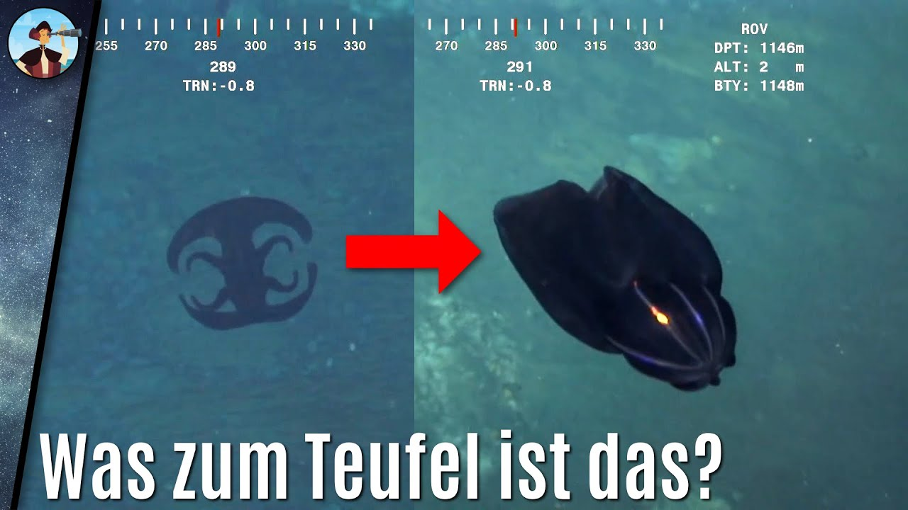 Download Unbekannte Tiefsee-Kreatur wandelt ihre Gestalt direkt vor der Kamera! Was ist das?