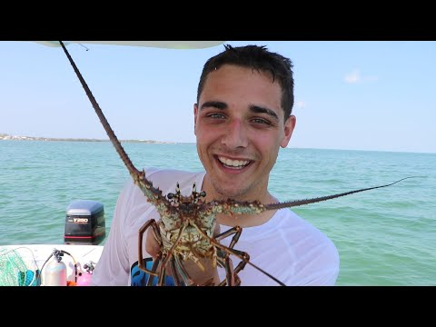 Spiny LOBSTER FIGHTS Back