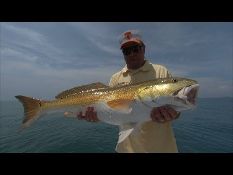 Bill Dance Fishing for Bull Reds and Jack Crevalle on the Space Coast