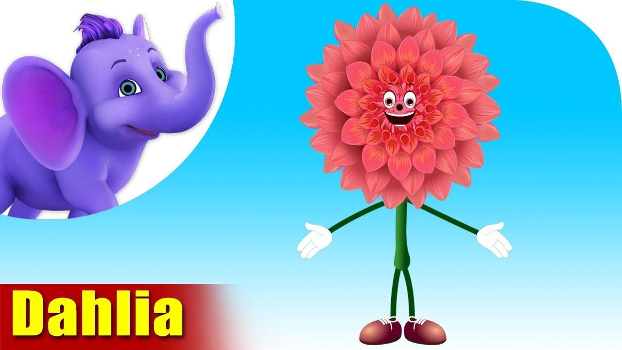 Dahlia Flower Song 4k Appu Series Youtube Dahlia is a girl's name of scandinavian origin meaning dahl's flower. dahlia flower song 4k appu series