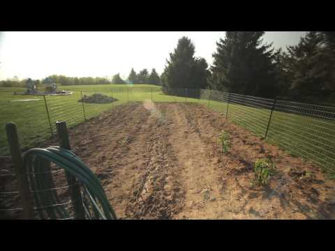 Best Vegetables to Grow in Zone 6 | Troy-Bilt®