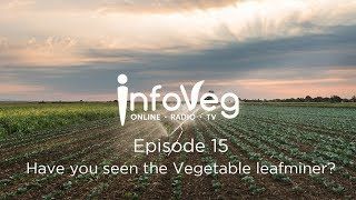 InfoVeg TV Episode 15 | Have you seen the Vegetable Leafminer?
