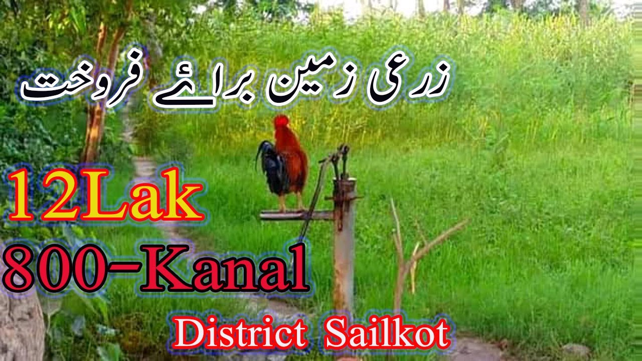 800Kanal Land For Sale Agriculture land in Pakistan Cheap Land One Owner Ship