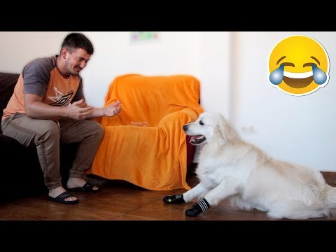 I Put Boots on My Dog: Bailey Tries Shoes For the First Time