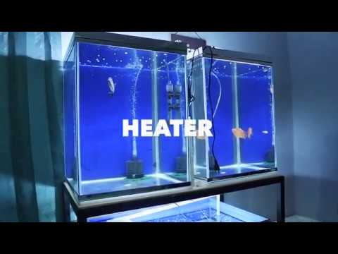 Cara memakai heater dan manfaat heater aquarium(AMARA ...