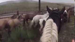 USA - Convoyage de chevaux à Medecine Lodge
