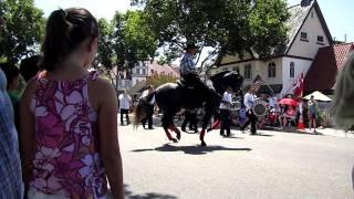 Dancing Horses in Solvang