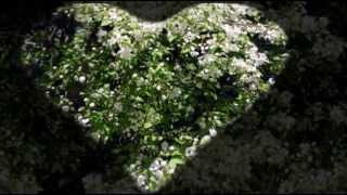 Цветы яблони индийская духовная музыка