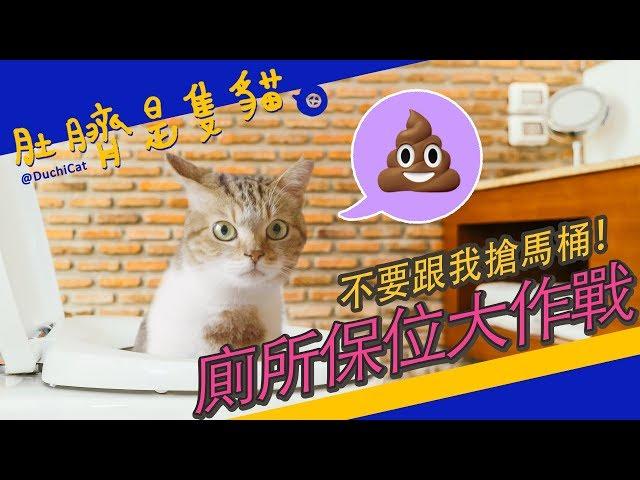 ◖肚臍是隻貓◗ 不要跟我搶馬桶!廁所保位大作戰~