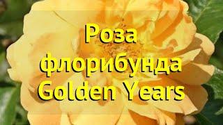 Роза флорибунда Голден йеарс. Краткий обзор, описание характеристик, где купить саженцы Golden Years