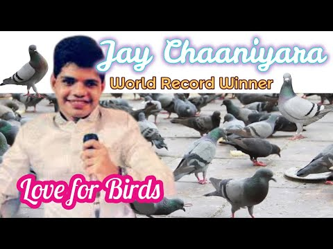 Save bird campaign By animal helpline, Rajkot