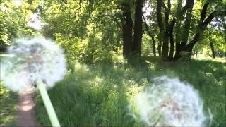 allons au bois de Vincennes