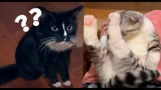 Baby Cats - Cute and Funny Cat Videos Compilation #11  Zfr Animals