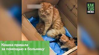 В Турции кошка принесла больных котят в клинику. И это не шутка