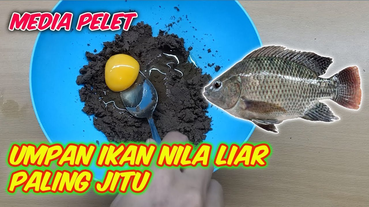 Umpan Ikan Nila Liar Paling Jitu Dan Ampuh Media Pelet Youtube
