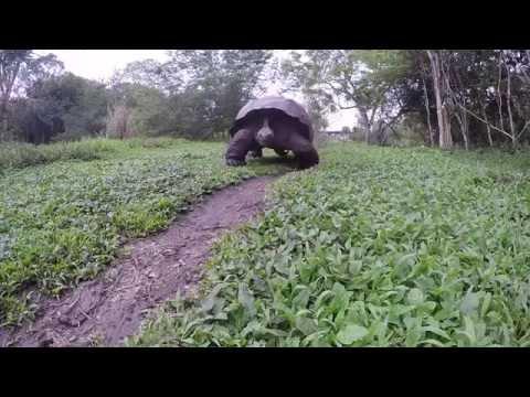 Galapagos Honeymoon Adventure