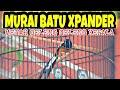 Aksi Murai Batu Xpander Mewah Geleng Geleng Kepala Mr Wawan Di Denpasar Bc Sampang Sultan Akbar  Mp3 - Mp4 Download