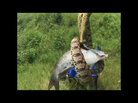 Bill Cunningham - VIDEO: Texas Fisherman Reels In A Snake Attached To A Fish