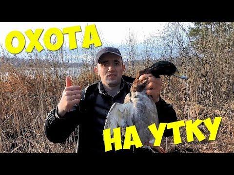 Как поймать дикую утку без ружья