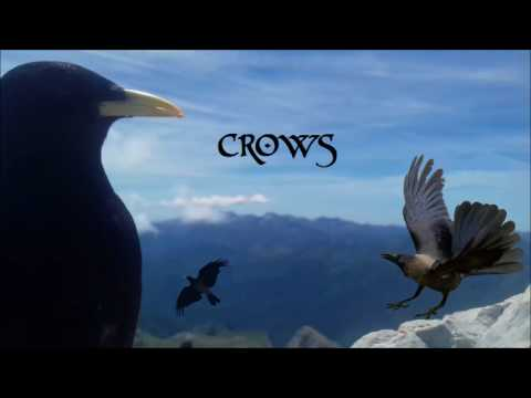 Celtic Metal Music - Crows