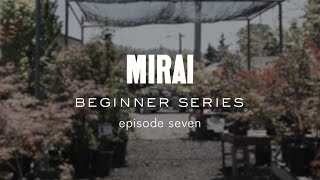 Bonsai Beginner Series - Soil