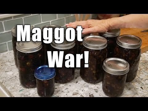OLIVE Brining  | Salt Brine Method | Garden Vlog
