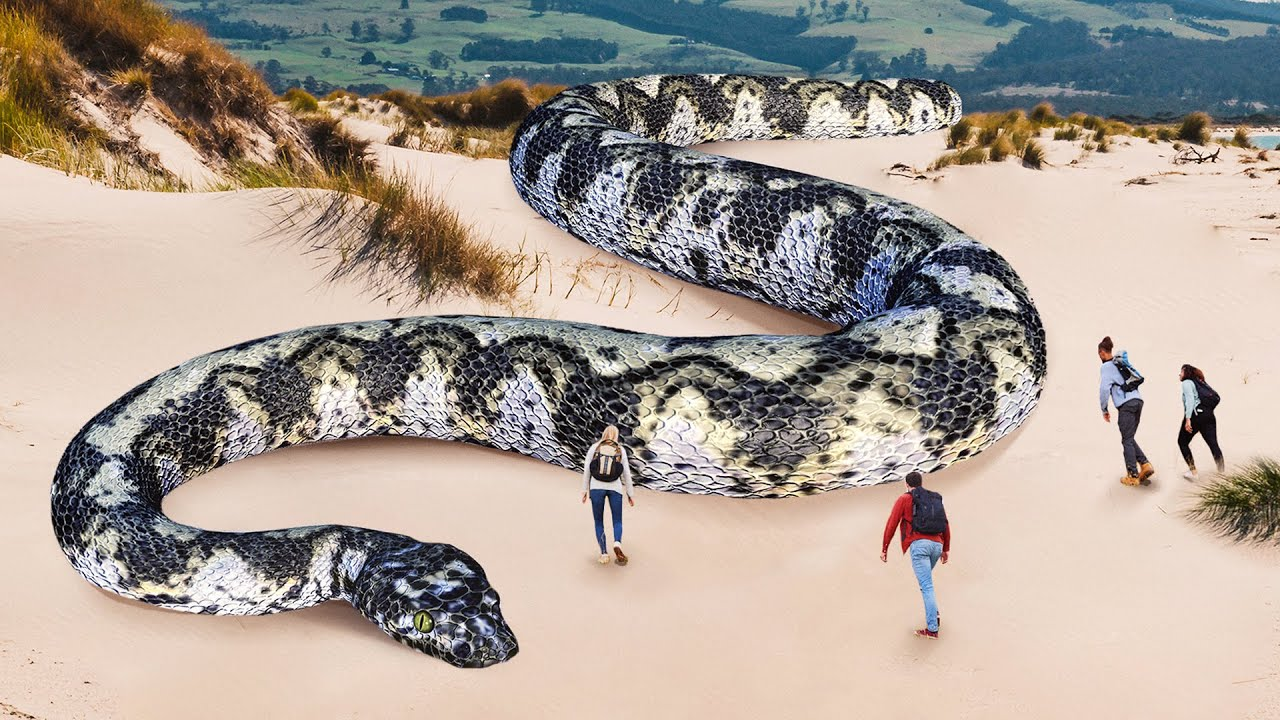Download 10 Largest Snakes in the World Discovered