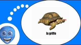 Французского видео урок = черепаха