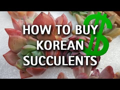 How To Buy Korean Succulents Online