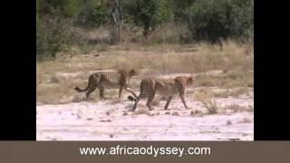 Kwara Camp, Botswana Safaris and honeymoons, video of Kwara Camp, Okavango Delta with Africa Odyssey