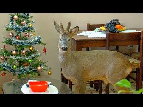 Nova Godina Sa Srndaćem Bambijem