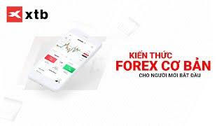 Giao dịch Forex căn bản dành cho người mới bắt đầu   XTB Trading Academy