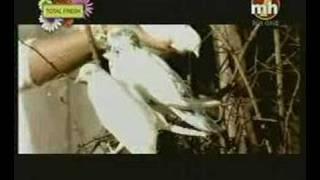 Bhupinder Gill Miss Neelam kabotri