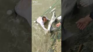 Top Shorts Fishing videos - fishing fish #006