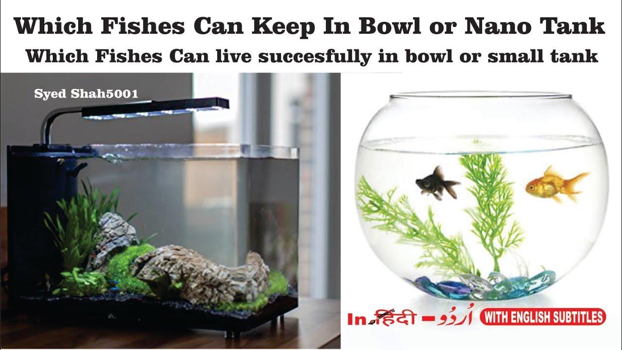 Best Fish For Nano Micro And Small Aquariums Top 5 Nano Fish Small