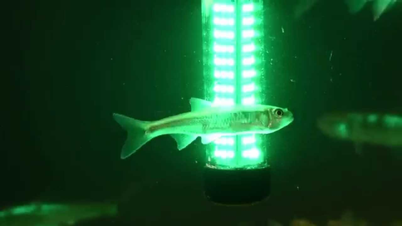 aqua-vu bio-lume underwater fish attracting light! - youtube, Reel Combo