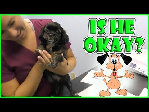 OUR NEW PUP HAS TO SEE THE VET  We Are The Davises