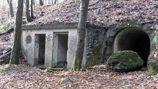 Лесные зарисовки от Штальхельма. 10