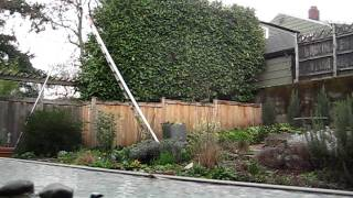 Finishing up a laurel hedge trim - Time Lapse