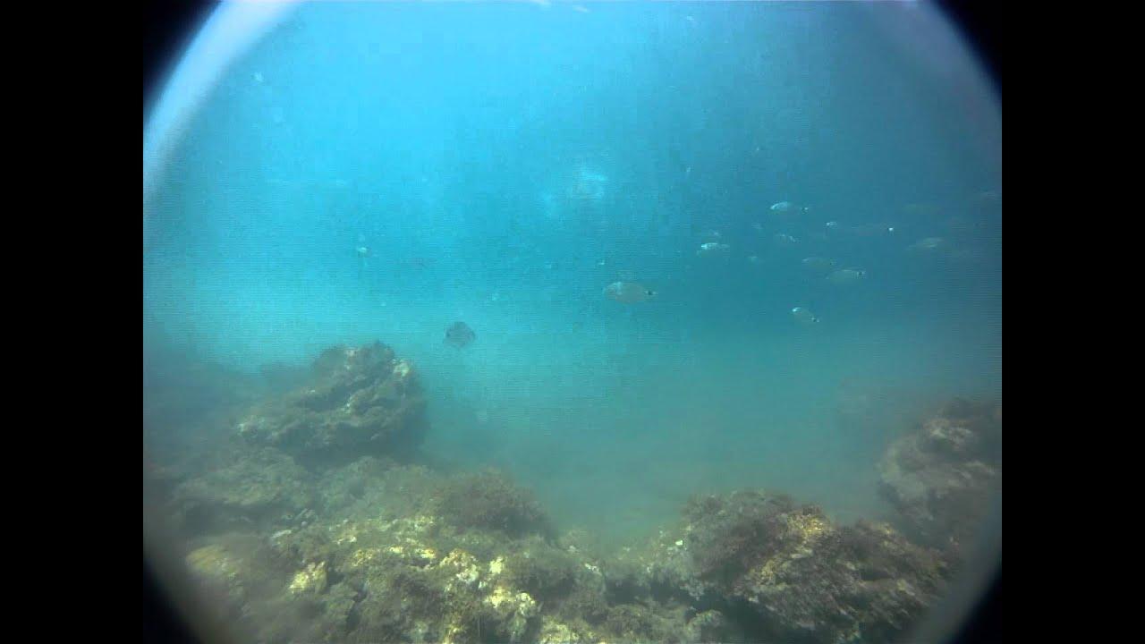 pesci dentro i bagni Fiume Livorno - YouTube