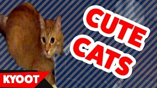 Cute Cats Being Cute Videos of 2016 Weekly Compilation | Kyoot Animals