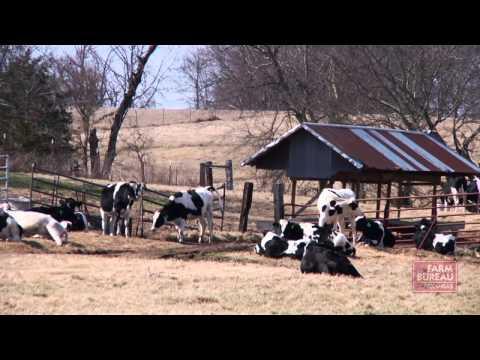Dairy Farming Heritage