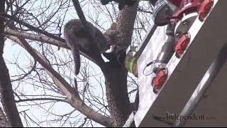 Grand Island Fire Department Rescues Cat in Tree