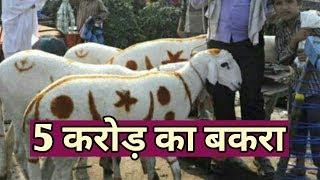 दुनिया का सबसे महंगा बकरा जिसकी कीमत 5 करोड़