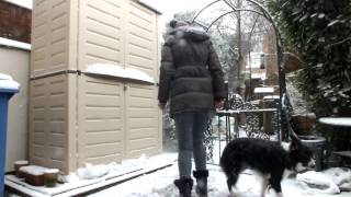 Dog Tricks in the Snow with Bella the Border Collie