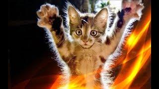 Прикольные кошки Смешные котята Позитив Создай себе хорошее настроение
