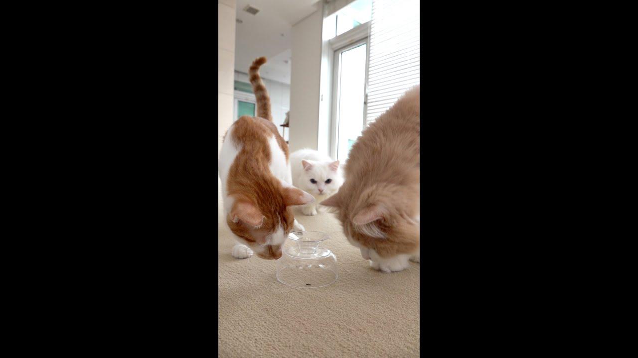 개미 한마리에 고양이들 초토화