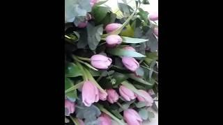 тюльпашки для девчонок(, 2016-03-03T11:26:35.000Z)