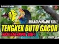 Masteran Tengkek Buto Gacor Full Durasi Panjang  Mp3 - Mp4 Download