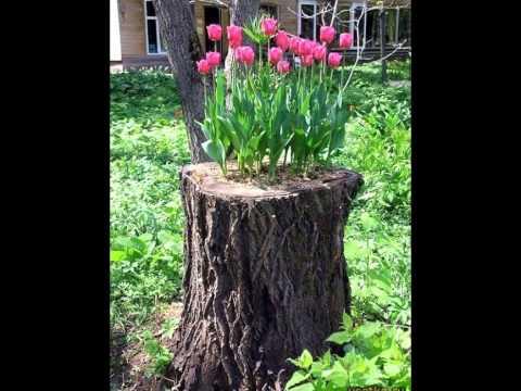 Dale vida o nuevo uso a los troncos de rboles youtube for Arboles de jardin fotos